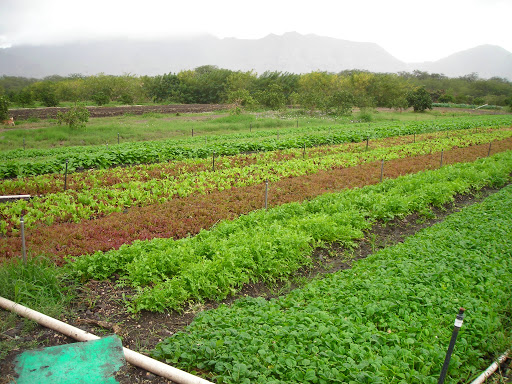 Ma'o Organic Farm in Hawaii