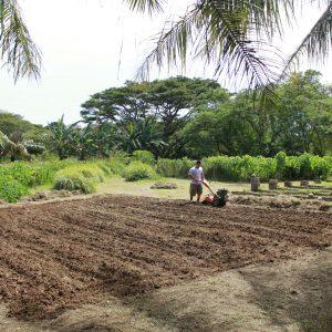 tilling land