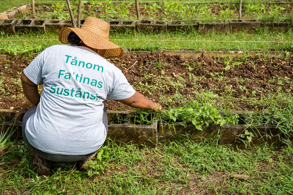 CSA Farm in Action