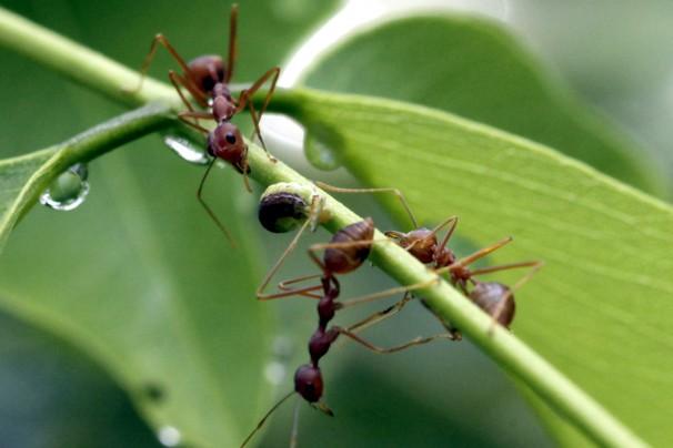 Crop Talk: 8 Ways to Banish Ants From Your Garden