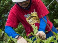 Man-pruning-V