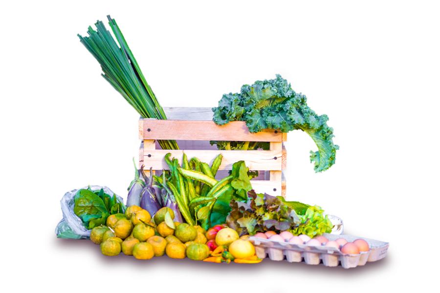 Farm to Table Guam CSA Subscription Box, large share