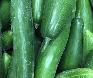 Cucumber300px