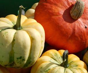 Pumpkin-Squash-300px