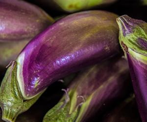 eggplant-H300px