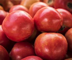tomatoes-H hi300px