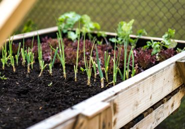 Tips on Starting and Maintaining an Organic Garden on Guam